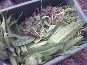 Fjerne ugress - eller sanke nytteplanter?