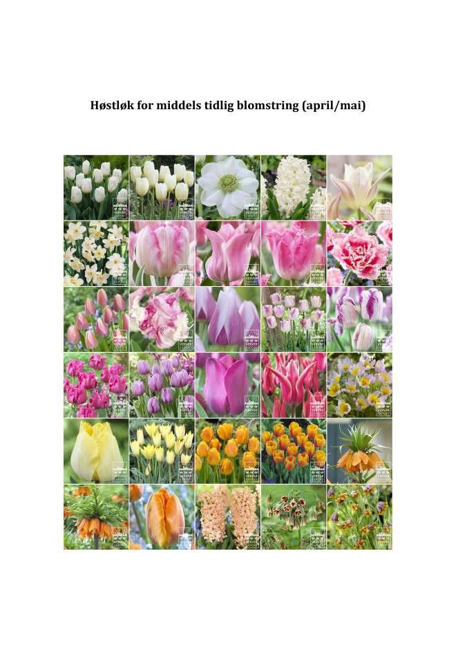 Forside. Høstløk for middels tidlig blomstring_Side_1